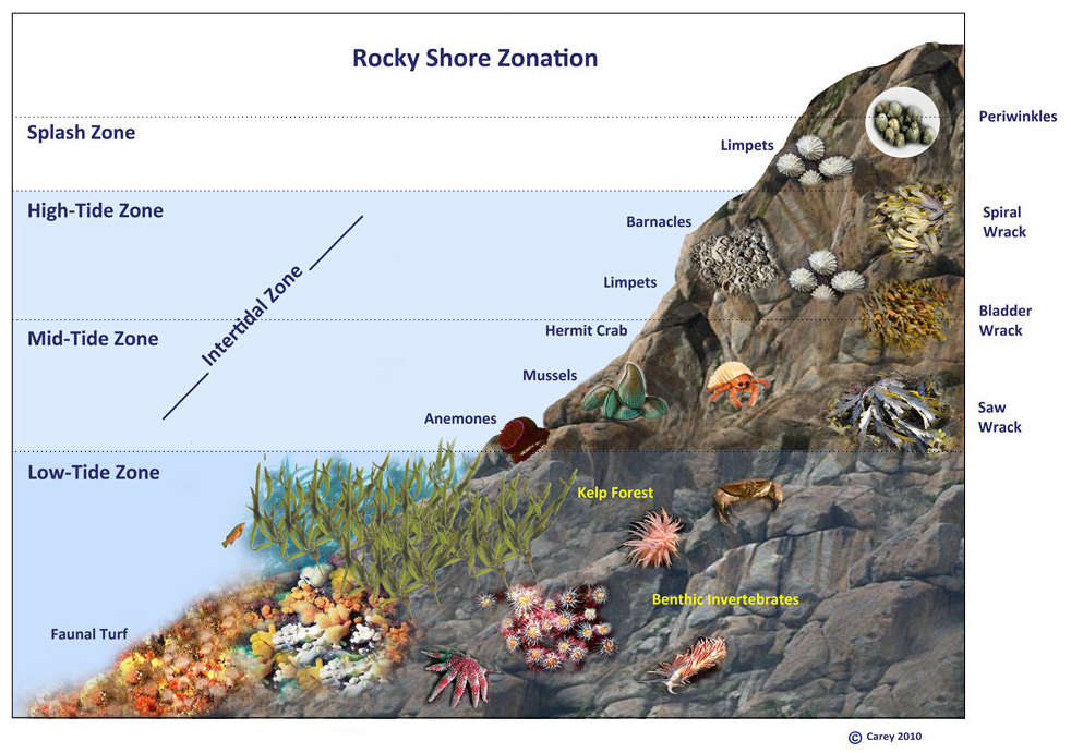 Image Gallery intertidal zone