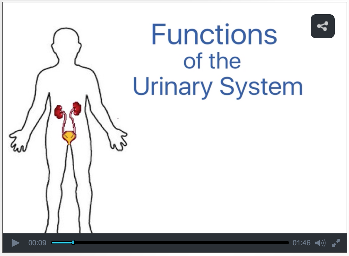 importance of the urinary system By jacquie eubanks bsn, rn the urinary system, also known as the renal system, consists of two kidneys, two ureters, the bladder and the urethra the urinary.